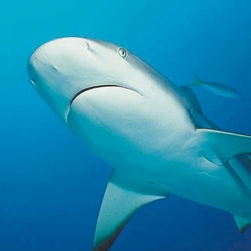 See sharks at one of the top attractions in the south