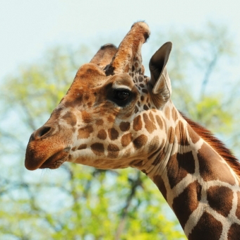 See Giraffes on kids days out in hampshire