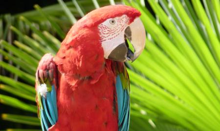 birdworld voucher